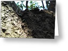 Tree Macro View Greeting Card
