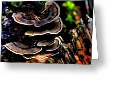 Tree Mushrooms Greeting Card by David Patterson