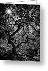 Tree Noir Greeting Card
