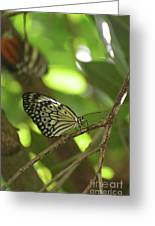 Tree Nymph Butterfly Sitting On A Tree Branch Greeting Card