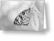 Tree Nymph - Light Greeting Card