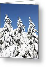 Tree-o Of Evergreens Greeting Card