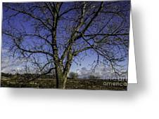 Tree Of Blue Greeting Card