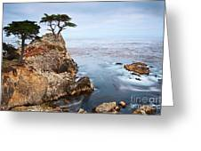 Tree Of Dreams - Lone Cypress Tree At Pebble Beach In Monterey California Greeting Card