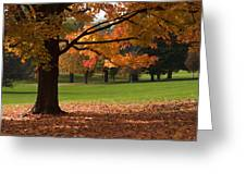 Tree Of Fall Autumn Colors Greeting Card