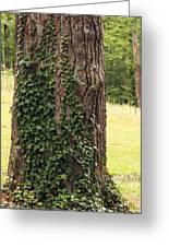 Tree Of Ivy Greeting Card