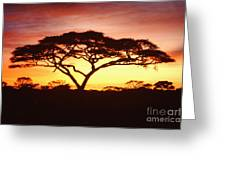 Tree Of Life Africa Greeting Card