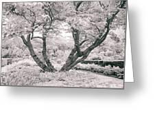Tree Of Life II Greeting Card
