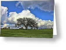 Tree Of Life Style Oak Tree And Coluds Greeting Card