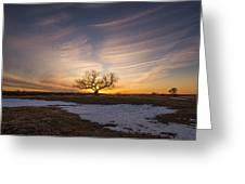 Tree Of Light  Greeting Card