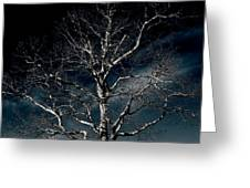 Tree Of Solitude Greeting Card