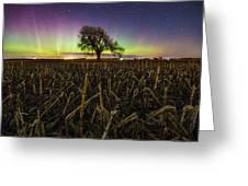 Tree Of Wonder Greeting Card