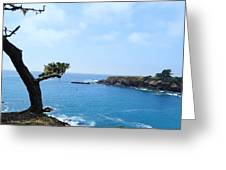 Tree On A Coastline Greeting Card