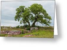 Tree On A Hill 2 Greeting Card