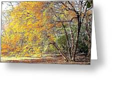 Tree On Fire Greeting Card