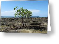 Tree On The Rocks Greeting Card