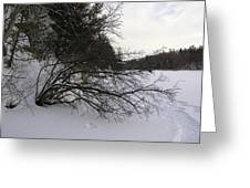 Tree Over Frozen Lake Greeting Card by Richard Mitchell