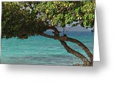 Tree Over Sapphire Beach Greeting Card
