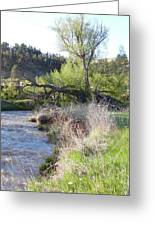Tree Over The River Greeting Card