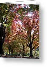 Tree Pathway Greeting Card