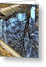 Tree Reflection From No Where Photography Image Greeting Card by James BO  Insogna