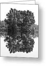 Tree Reflection In Black And White Greeting Card