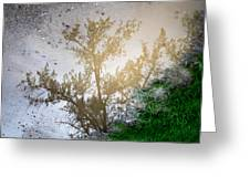 Tree Reflection Upside Down 1 Greeting Card