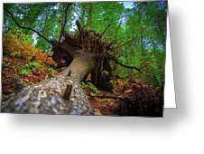 Tree Root Ball Greeting Card