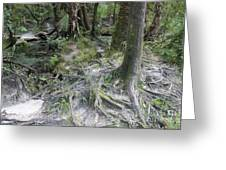 Tree Roots And Lithia Springs Greeting Card