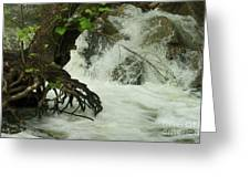 Tree Roots In The Water Greeting Card