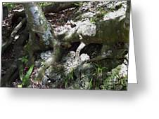 Tree Roots On The Bank Greeting Card