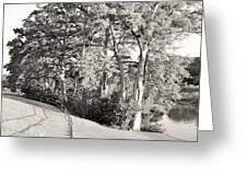 Tree Shaded Walkway Greeting Card