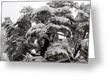 Tree-sicle Greeting Card
