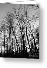Tree Silhouette Bw Greeting Card