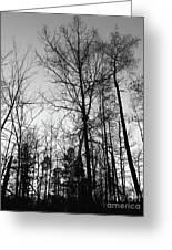 Tree Silhouette II Bw Greeting Card