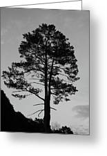 Tree Silhouette In The Dark Greeting Card