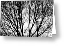Tree Silhouettes In Black And White Greeting Card