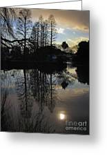 Tree Silhouettes Greeting Card
