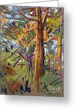 Tree Sketch Greeting Card