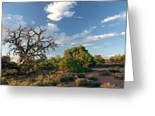 Tree Sky Utah Greeting Card