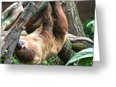 Tree Sloth Greeting Card