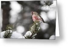 Tree Snow Sitter Greeting Card