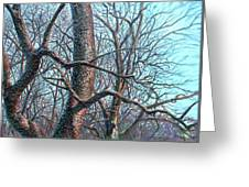 Tree Study Greeting Card