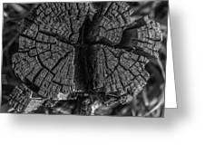 Tree Stump Black And White Greeting Card