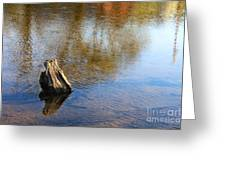 Tree Stump Surrounded By Water Greeting Card