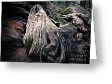 Tree Stump Greeting Card