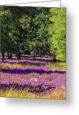 Tree Stumps In Common Heather Field Greeting Card
