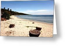 Tree Stumps On White Beach Greeting Card