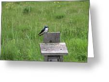 Tree Swallow 1 Greeting Card