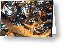 Tree Tangle 0551 Greeting Card
